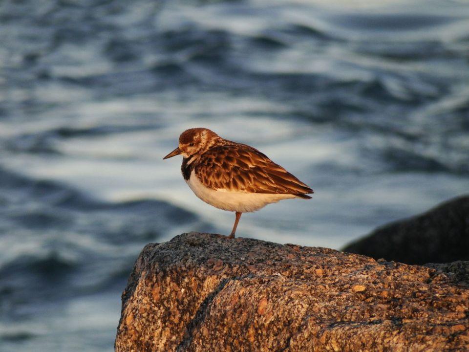 Joy of Birding