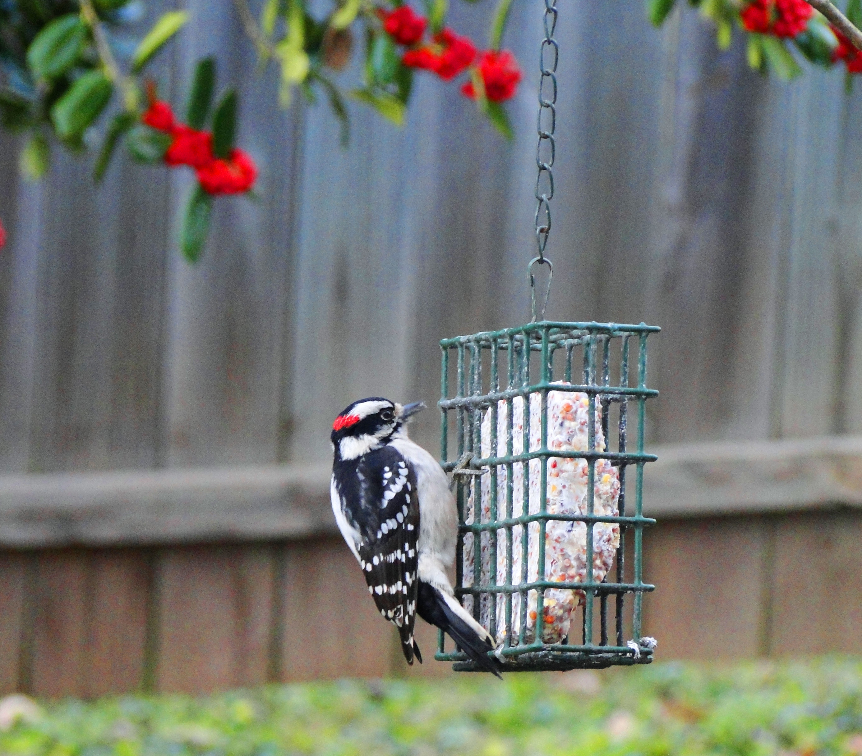 The Importance of Suet Feeding