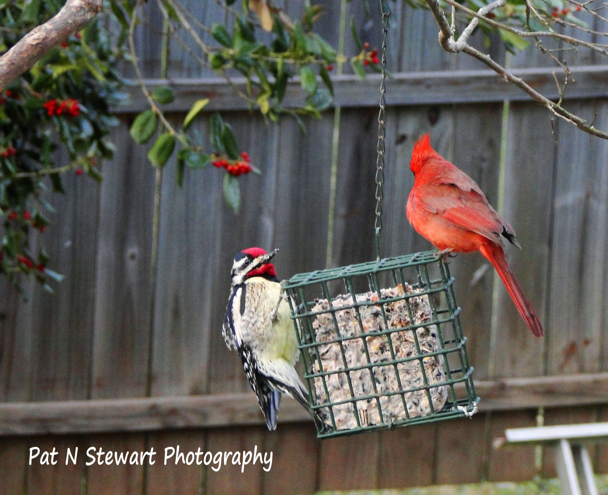 "Cardinal: ""These Are the Rules of My Yard"""
