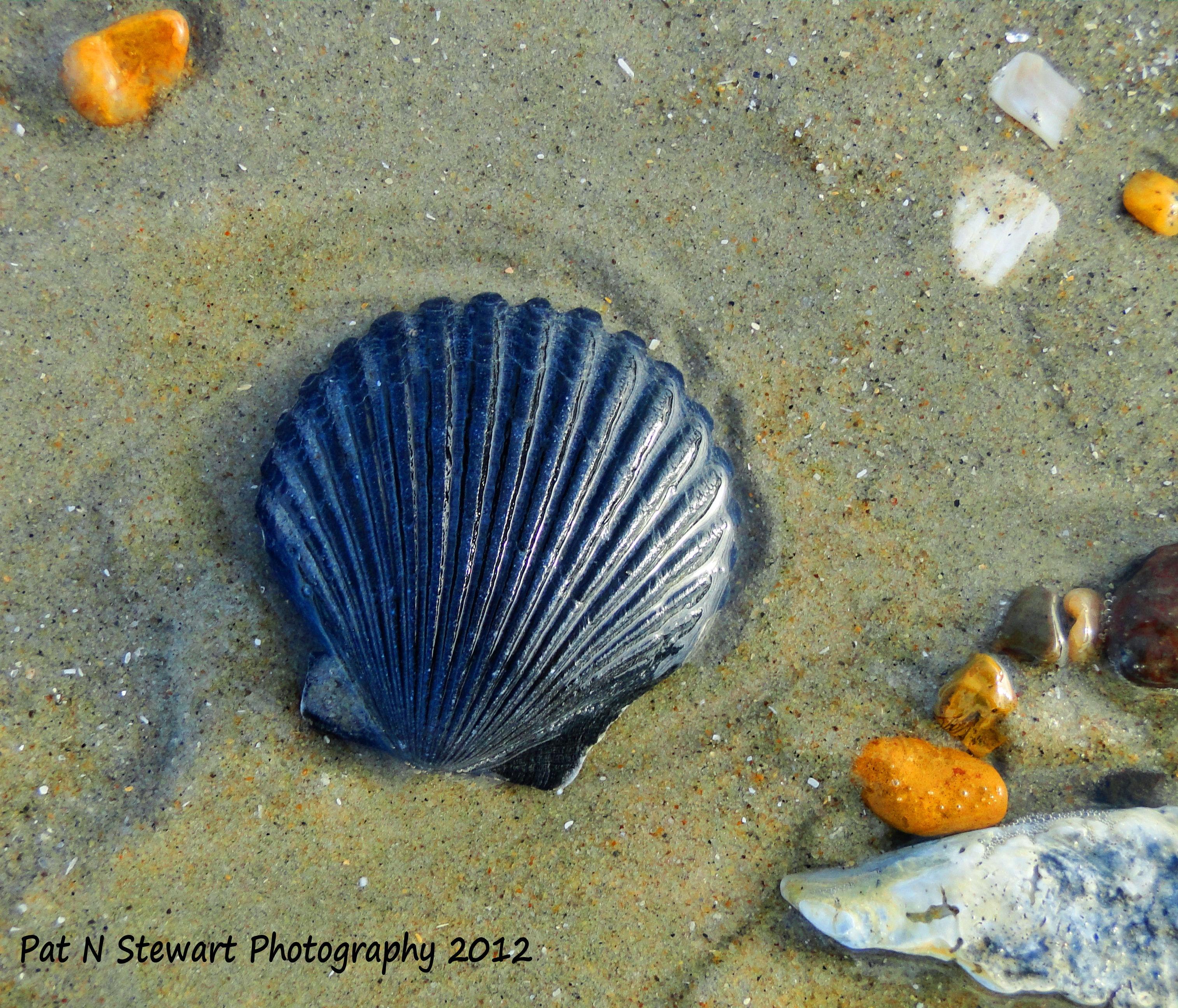Uniquely Beautiful Sea Shells