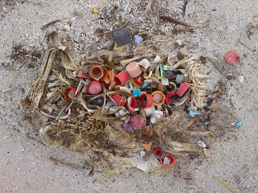 Dead Albatross Key to Our Future?